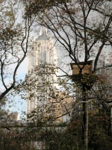 Tree Houses in Mad. Sq. Park